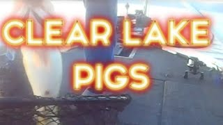 Clearlake (CA) United States  City pictures : Clear Lake, CA Bass Fishing August 2015