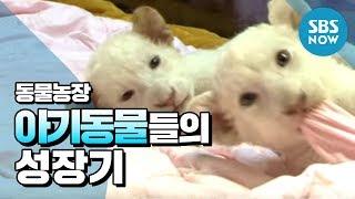 Video SBS [동물농장] - 아기동물들의 성장기 MP3, 3GP, MP4, WEBM, AVI, FLV Agustus 2018