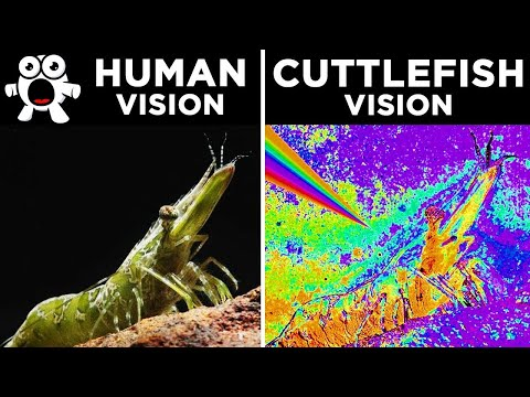 FASCINATING! Learn How 20 Different Animals See the World