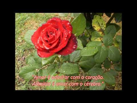 Rosas e frases de amor