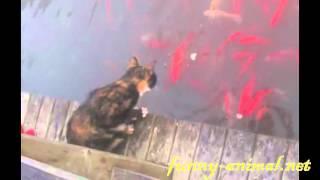 Cat Catching Fish