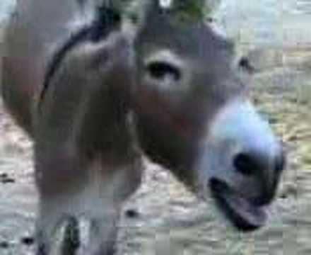 Donkey Laughing !! Very Funny