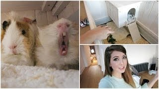 A little tour of my guinea pig house & homesense haulin' Like for guinea pig yawns WHERE ELSE TO FIND ME - COME SAY HI: ...