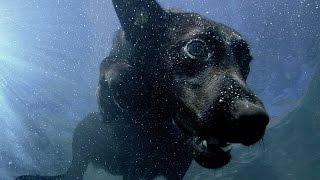 La nage des chiens filmée au ralenti