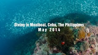 Moalboal Philippines  city photos gallery : [Sardine Run] Diving in Moalboal, Cebu, The Philippines, May 2014