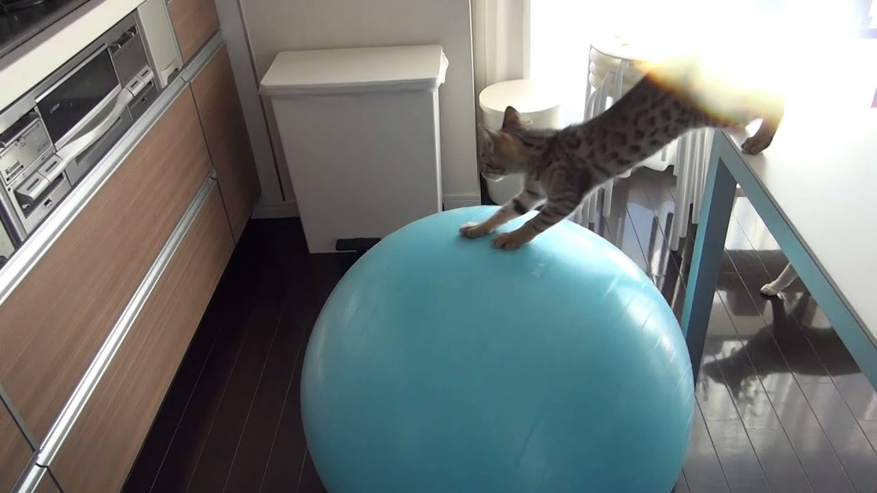 Mačija snalažljivost