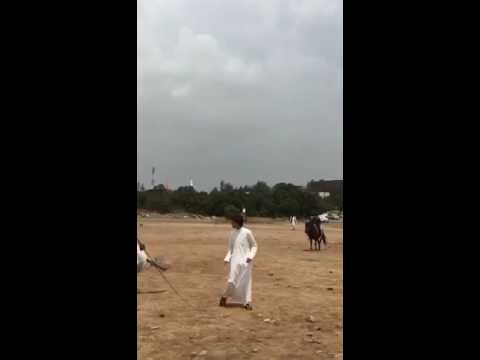 #فيديو : لحظة سقوط حصان على شاب