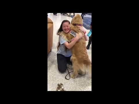 Service Dog Reunites With Owner In Hospital
