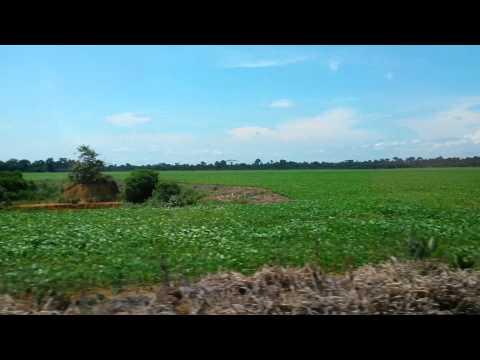 Plantação de soja em Machadinho Ro