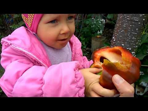 Що їсть дитина сироїдик? В бабусі на городі їмо все прямо з кущів)