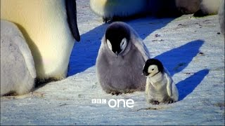 Nonton Snow Chick  A Penguin S Tale   Trailer   Bbc One Christmas 2015 Film Subtitle Indonesia Streaming Movie Download