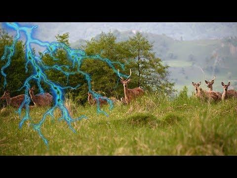 挪威山頭323頭馴鹿「在幾秒鐘內被雷擊中」瞬間集體死在草地上,死因讓所有人都不敢再小看大自然的力量…