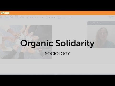 examples of solidarity in society