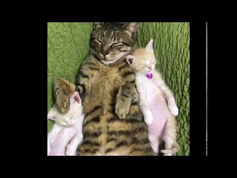 due-gattini-orfani-salvati-dal-braccio-della-morte-trovano-un-nuovo-papa-gatto