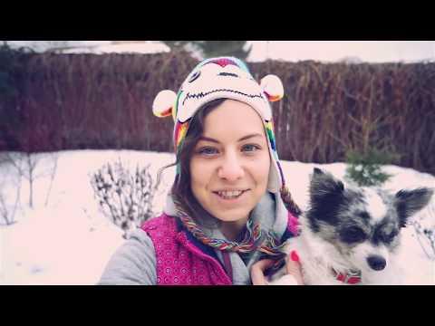 Моя история жизни и собаки