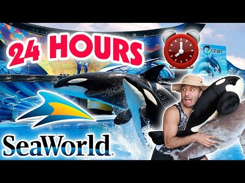 (SCARY) 24 HOUR OVERNIGHT in SEAWORLD FORT ⏰  | OVERNIGHT CHALLENGE AT SEAWORLD SNEAKING BY SECURITY (видео)