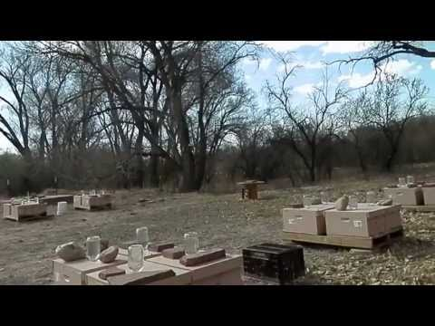 This is today's tour of New Mexico Bees LLC's Apiary