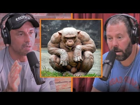 Chimps are Stronger than Bodybuilders - Joe Rogan