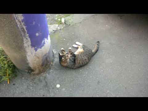 The Funny Cat Flea Dance - Funny Cat Videos 2018