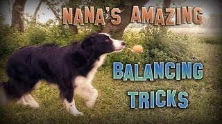 Nana The Border Collie's Amazing Balancing Tricks
