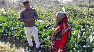 Climate smart vegetables production technology