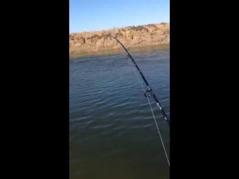 Видео рыбалка на чограе