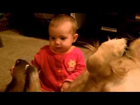 Köpek Ve Bebek Arkadaşlığı
