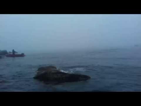 Косатки Магадан (видео)