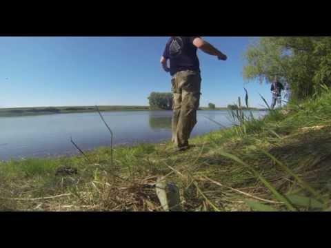 как ловить селедку на речке