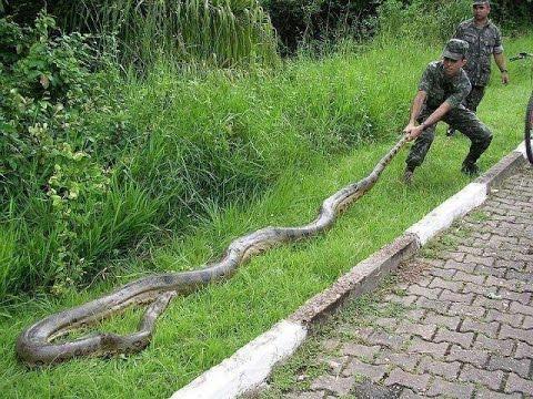 Rainforest Animals: 10 Amazing Jungle Creatures