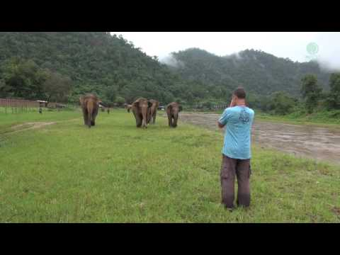 A Man Call Elephant In Different Angle