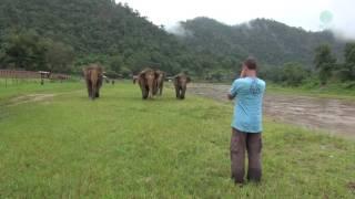 Słonie uznały człowieka za członka swojego stada! Zobacz co się stanie, gdy zacznie je wołać do siebie!