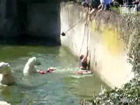 Polar Bears Attack Woman at Zoo