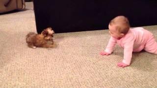 Mała dziewczynka zaczyna się sprzeczać z pieskiem! Padniesz gdy usłyszysz co jej odpowiedział!