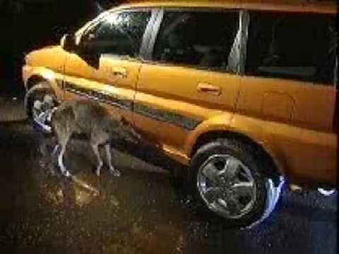 Banned Commercials - Car Pisses At Dog (Honda).