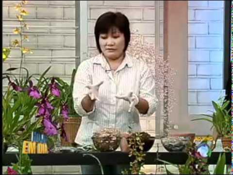 Aprenda a cuidar de orquídeas