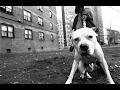 Hard Aggressive Underground Hardcore Rap/HipHop Instrumental 2015 W/LINK