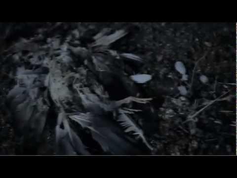 Tekst piosenki Gary Numan - The Fall po polsku