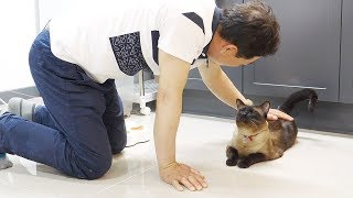Video My Father who did not like cats... But...! MP3, 3GP, MP4, WEBM, AVI, FLV Juni 2018