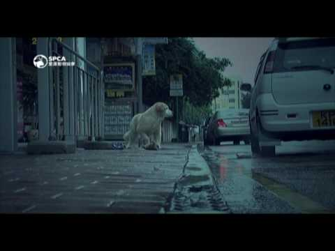 spca - Through the narration about the work of SPCA, it's to remind people for not abandoning or abusing animals.