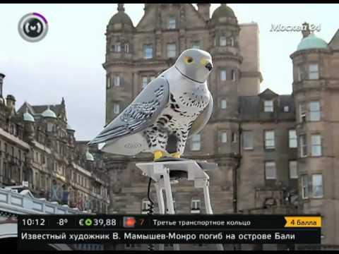 В Шотландии на вокзалах голубей гоняют механические соколы - Центр транспортных стратегий