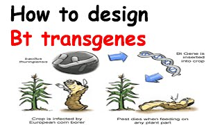 How to design Bt transgenes