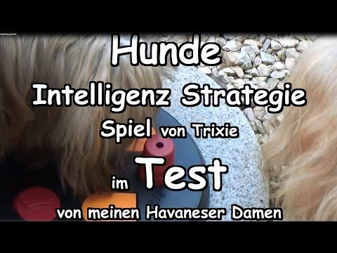 Test ! Hund  Intelligenz Spielzeug ! Test! Trixie  Strategie Spiel Hunde Havaneser Schnüffeltraining