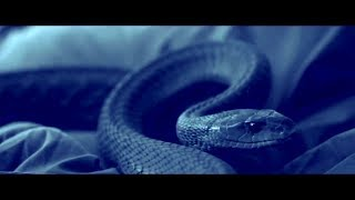 Nonton SERPENT (2017) Official Trailer (HD) KILLER SNAKE Film Subtitle Indonesia Streaming Movie Download