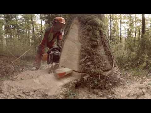 Erneuerbare Energie aus einem Baumstamm - Holzkraftwerk Basel