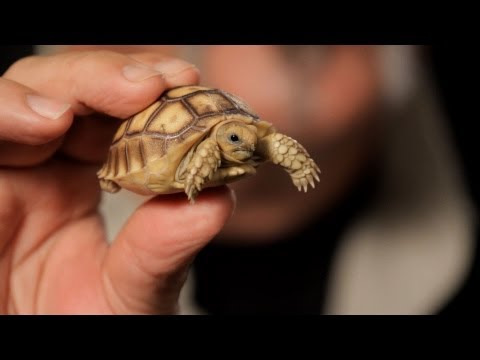 how to care tortoise pet in home