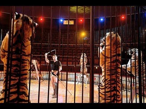 Circus Maximus – Tigrisek a Fővárosi Nagycirkuszban