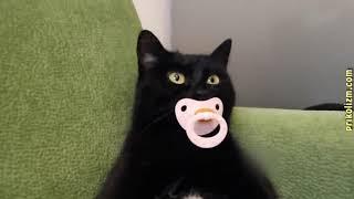 Приколы с кошками и котами. Подборка смешных и интересных видео с котиками и кошечками
