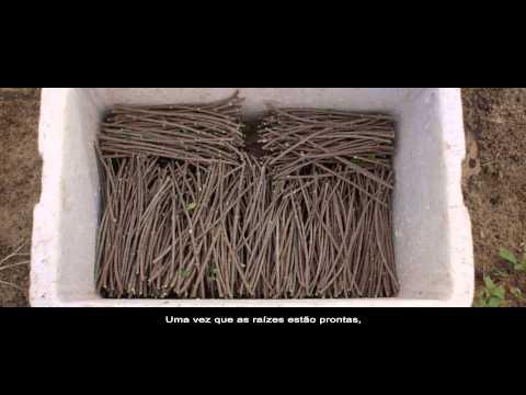 As árvores e a tecnologia - Fazenda Amway Nutrilite Brasil