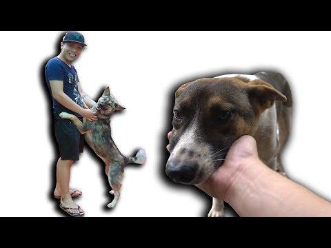 NTN - Thăm Lại Những Chú Chó Được Cứu Từ Lò Mổ - Thời lượng: 16 phút.